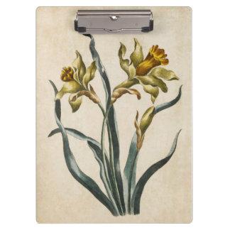 Vintage Botanical Floral Daffodil Illustration Clipboards