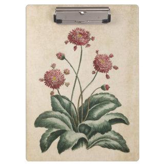 Vintage Botanical Floral Daisy Illustration Clipboard