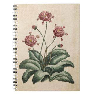 Vintage Botanical Floral Daisy Illustration Notebook