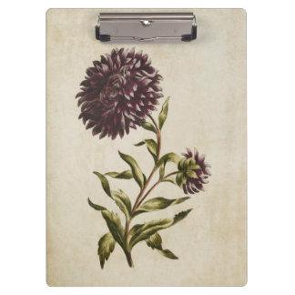 Vintage Botanical Floral Double Aster Illustration Clipboard