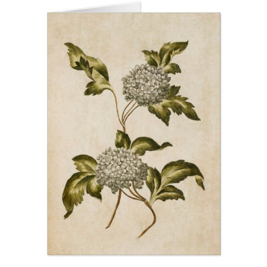 Vintage Botanical Floral Guelder Rose Illustration Card