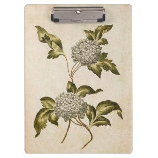 Vintage Botanical Floral Guelder Rose Illustration Clipboard