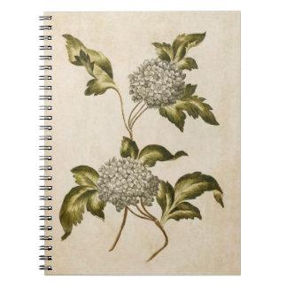 Vintage Botanical Floral Guelder Rose Illustration Notebook