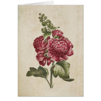 Vintage Botanical Floral Hollyhock Illustration Card