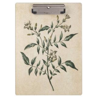 Vintage Botanical Floral Jasmine Illustration Clipboard