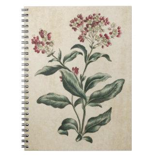 Vintage Botanical Floral Laurestina Illustration Notebook