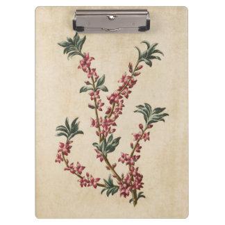Vintage Botanical Floral Mezereon Illustration Clipboard