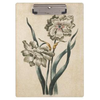 Vintage Botanical Floral Narcissus Illustration Clipboard