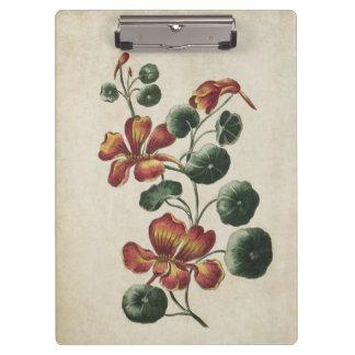 Vintage Botanical Floral Nasturtium Illustration Clipboard