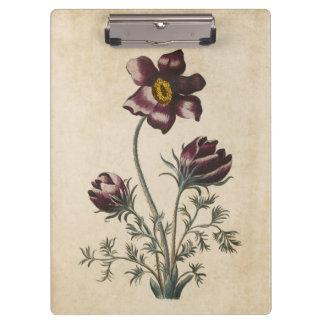 Vintage Botanical Floral Pasque Illustration Clipboard