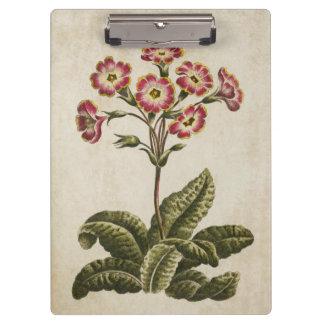 Vintage Botanical Floral Polianthus Illustration Clipboard