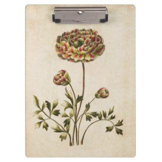 Vintage Botanical Floral Ranunculus Illustration Clipboard