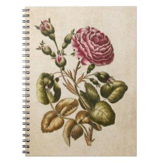 Vintage Botanical Floral Rose Illustration Notebook
