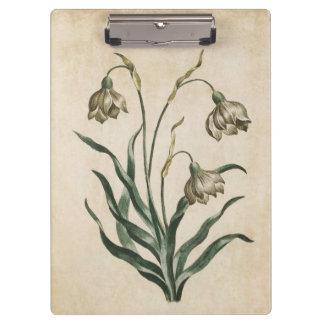 Vintage Botanical Floral Snowdrop Illustration Clipboard