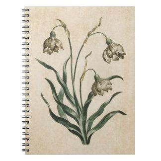 Vintage Botanical Floral Snowdrop Illustration Notebook