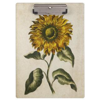 Vintage Botanical Floral Sunflower Illustration Clipboards