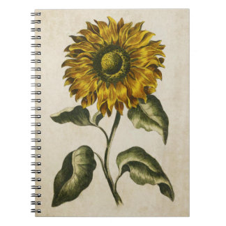 Vintage Botanical Floral Sunflower Illustration Notebook