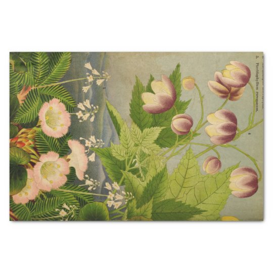 Vintage Botanical Flower Book Illustration Tissue Paper