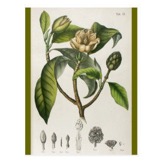 Vintage Botanical Flower Illustration Postcard