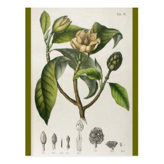 Vintage Botanical Flower Illustration Postcards