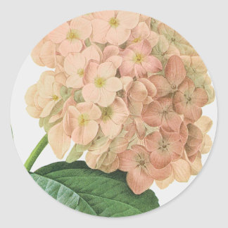 Vintage Botanical Hydrangea Flower Wedding Classic Round Sticker