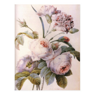 vintage botanical illustration, pink rose postcard