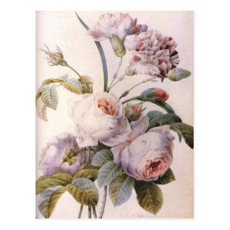 vintage botanical illustration, pink rose postcard