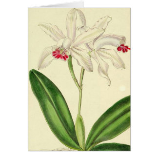 Vintage Botanical Orchids Card
