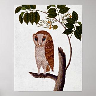 Vintage Botanical Owl Boorong Antoo Poster