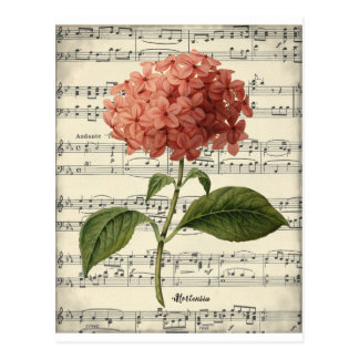 Vintage botanical postcard with pink hortensia