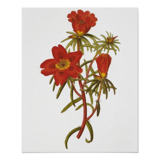 Vintage Botanical Poster