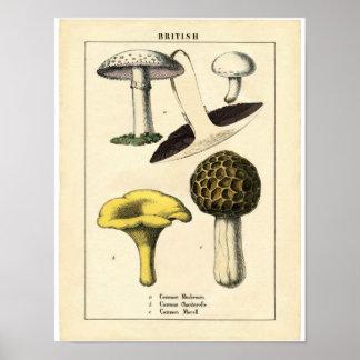 Vintage Botanical Poster - British Mushroom