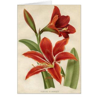 Vintage Botanical Print - Amaryllis Card