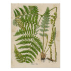 Vintage Botanical Print - Bracken / Ferns
