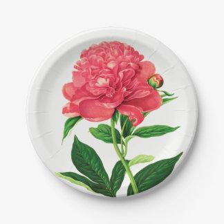 Vintage Botanical Print, Coral Pink Peony Paper Plate