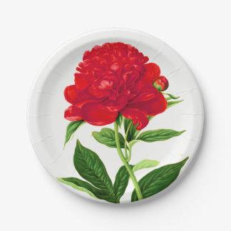 Vintage Botanical Print, Deep Red Peony Paper Plate