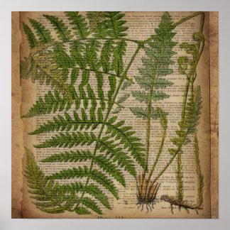 vintage botanical print leaves pattern fern