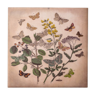 Vintage Botanical Prints Wildflowers Butterflies Small Square Tile