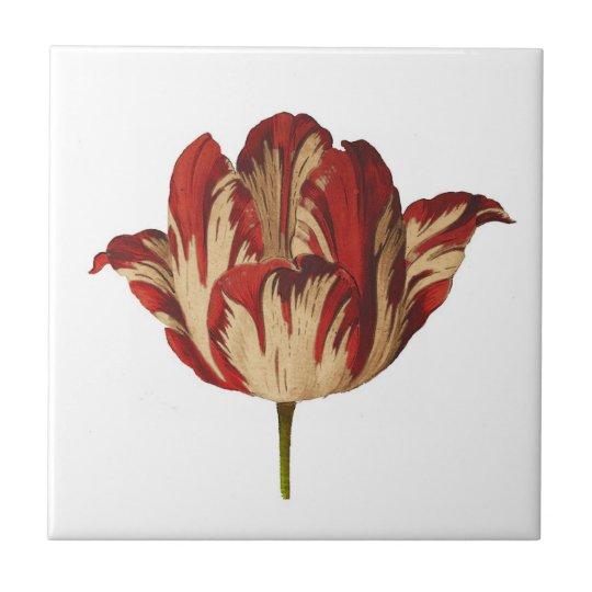 Vintage Botanical Rembrant Tulip Ceramic Tile