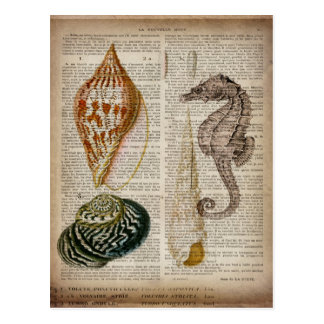 vintage botanical seahorse ocean beach sea shells postcard
