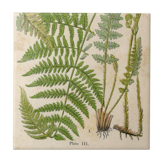 Vintage Botanicals Illustrations Small Square Tile