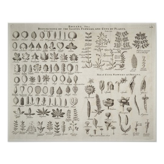 Vintage Botany Leaves & Flowers Reference, 1753 Poster
