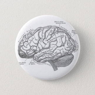 Vintage Brain Anatomy 6 Cm Round Badge