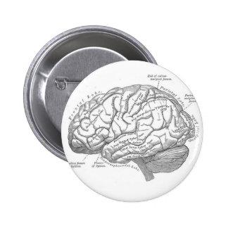 Vintage Brain Anatomy 6 Cm Round Badge