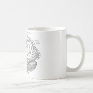 Vintage Brain Anatomy Basic White Mug
