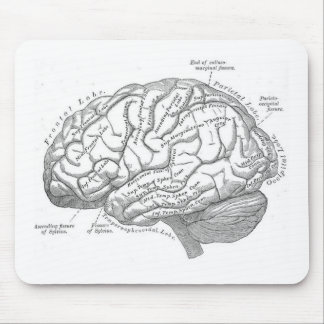 Vintage Brain Anatomy Mouse Mat