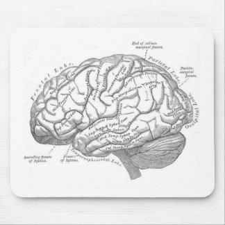 Vintage Brain Anatomy Mouse Pad