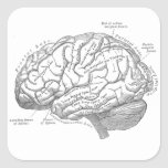 Vintage Brain Anatomy Square Sticker