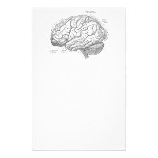 Vintage Brain Anatomy Custom Stationery