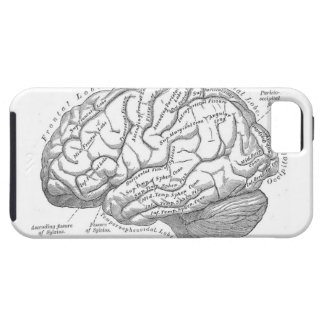 Vintage Brain Anatomy Tough iPhone 5 Case